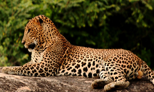 sri lanka wildlife tour